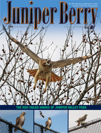 The Juniper Berry March 2013 Cover