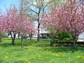 Street trees beautify our neighborhoods