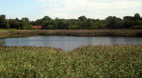 BERRY BITS: State and City reverse course on Ridgewood Reservoir plans