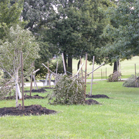 Trees Fall Victim to Mindless Vandalism in Juniper Valley Park