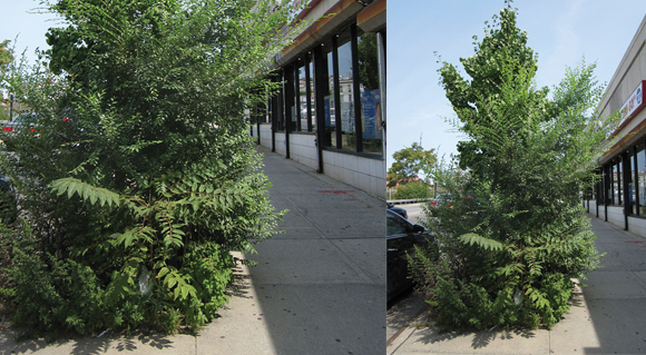 things that are dumb: Tree needs a Trim