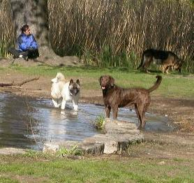 DOH hearing brings out the worst in off-leash advocates