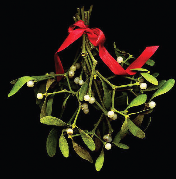 'Tis the season for mistletoe and holly