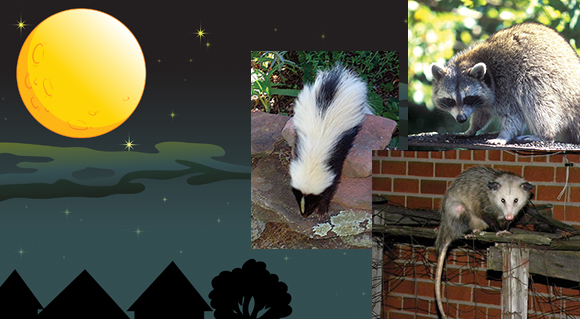 Our Nocturnal Neighbors
