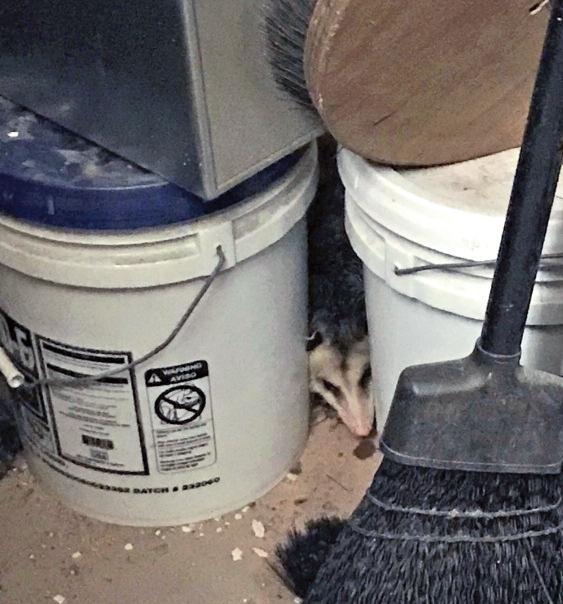 Opossum breaks into 104th Precinct stationhouse